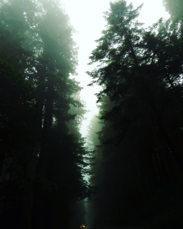 A road is buried deep in the darkness of the tall redwoods. The  narrow view of the sky is filled with fog. The wall of threes is dark green, more like black. Only two lonely tiny orange lights shine.